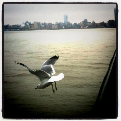 Amazing photos of birds diving on Hudson #photography #iphoneography