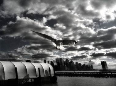 Flying with an aura #photography #iphoneography