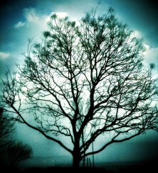Tree of life #iphoneography #photography