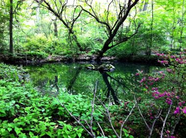 The green heaven in a concrete jungle #Centralpark in #NYC #photography #iphoneography