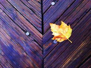 A leaf on the boardwalk, beauty in a way chance arranges #iphoneography #photography