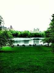 The lawns of Central Park