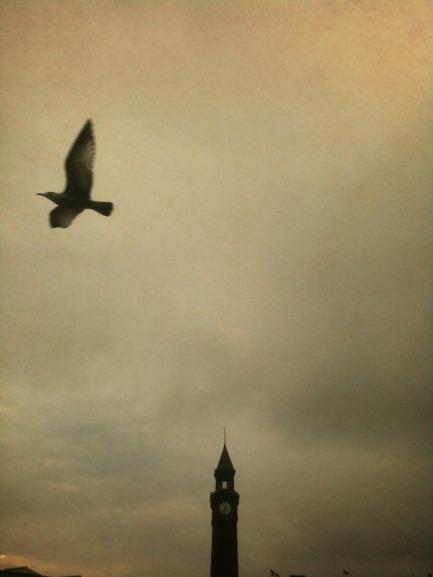 Flight to freedom #iphoneography #photography #art
