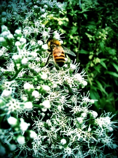 Don't worry bee happy #iphoneography #photography #nature