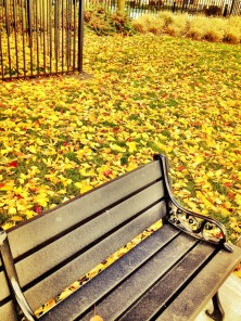The yellow carpet #iphoneography #photography #fall