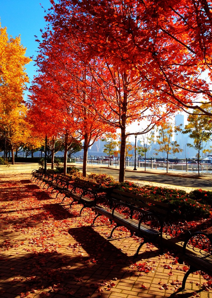 Benches under the lovely red trees #iphoneography #photography