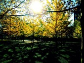 Sun perched on a branch #iphoneography #photography #fall #hoboken