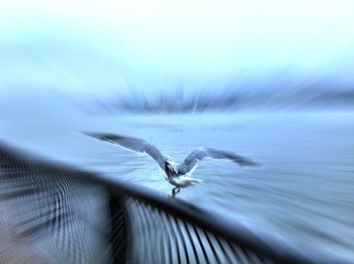 SPEED #iphoneography #photography #birds