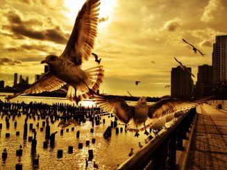 A seagulls flight plan #iphoneogrphy #photography #birds #hudson #seagull