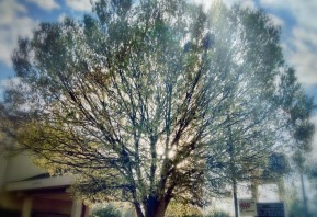 Shafts of light #iphoneography #photography #orlando