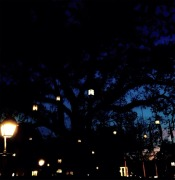 The tree with lamp fruits #iphoneography #photography #disney