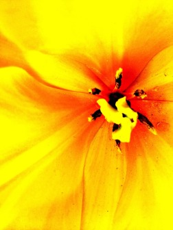 Flowers which greet me every morning while I walk to work #iphoneography #photography
