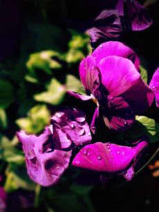 Morning dew #iphoneography #photography