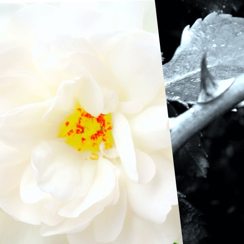 The thorn of reality woke my flower of a deream